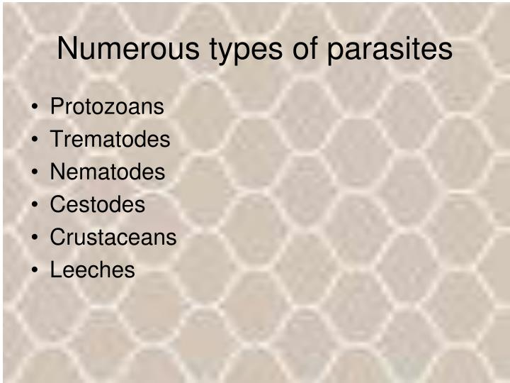 Numerous types of parasites