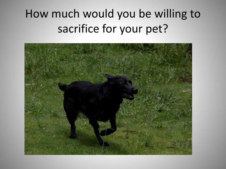 How much would you be willing to sacrifice for your pet?