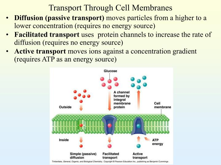 Transport Through Cell Membranes