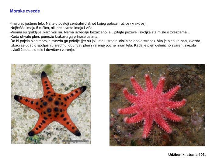 Morske zvezde