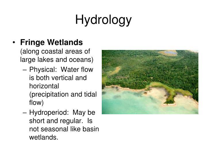 Fringe Wetlands