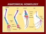 anatomical homology
