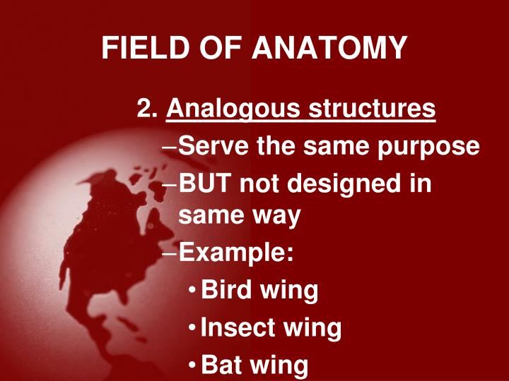 FIELD OF ANATOMY