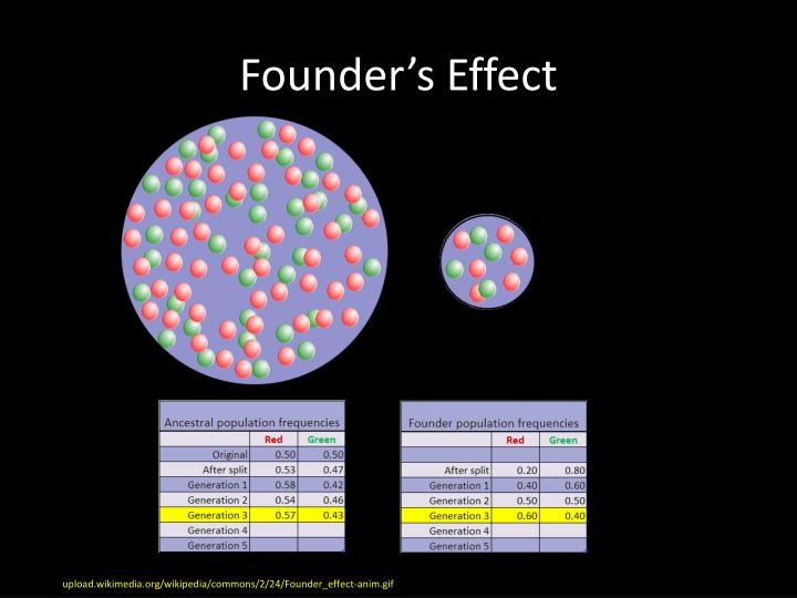 Founder's Effect