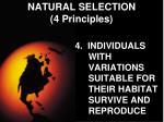 natural selection 4 principles3