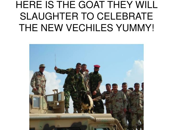 Here is the goat they will slaughter to celebrate the new vechiles yummy