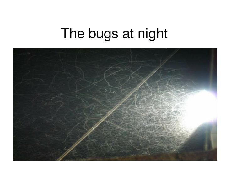 The bugs at night