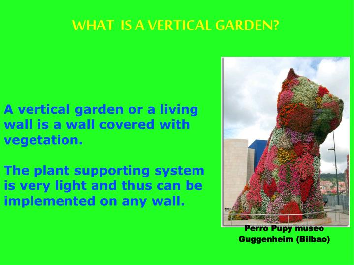 A vertical garden or a living wall is a wall covered with vegetation.