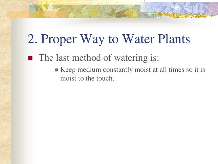 2. Proper Way to Water Plants