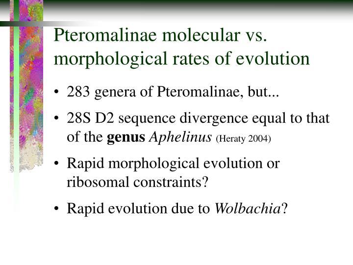 Pteromalinae molecular vs. morphological rates of evolution