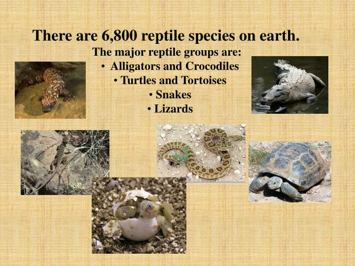 There are 6,800 reptile species on earth.