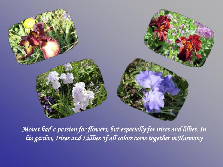 Monet had a passion for flowers, but especially for iris