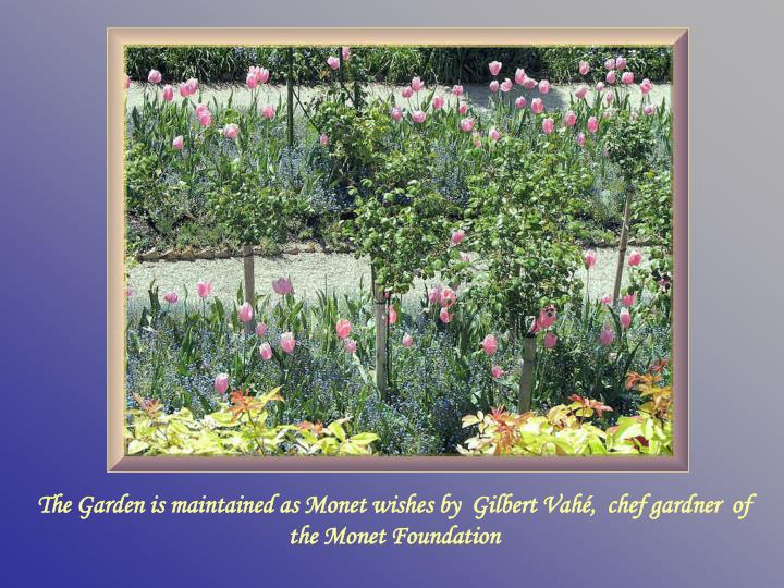 The Garden is maintained as Monet wishes by  Gilbert Vahé,  chef gardner  of the Monet Foundation
