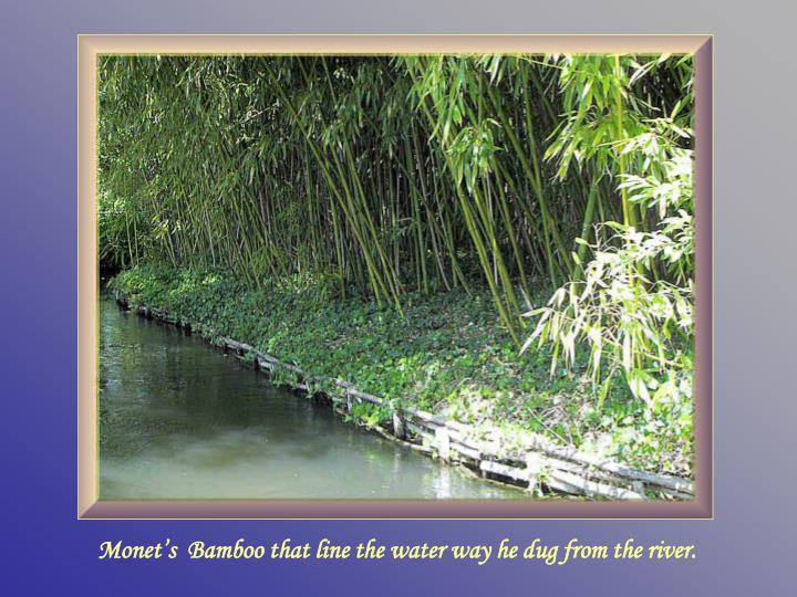 Monet's  Bamboo that line the water way he dug from the river.