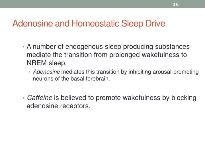 Adenosine and Homeostatic Sleep Drive