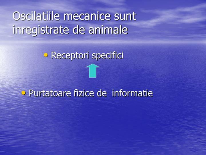 Oscilatiile mecanice sunt inregistrate de animale