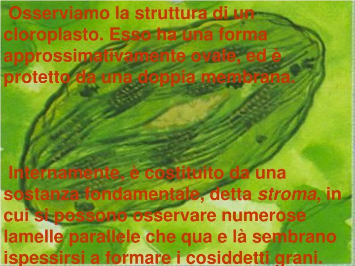 Osserviamo la struttura di un cloroplasto. Esso ha una forma approssimativamente ovale, ed è protetto da una doppia membrana.