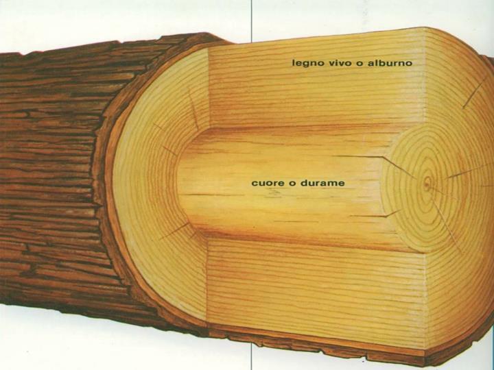 I fusti legnosi sono quelli che hanno la struttura più elaborata. La parte più interna del tronco detta cuore o durame è formata da cellule riempite di resine e da altro materiale: sono cellule morte totalmente inattive.