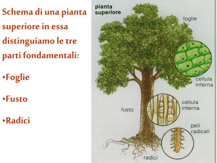 Schema di una pianta