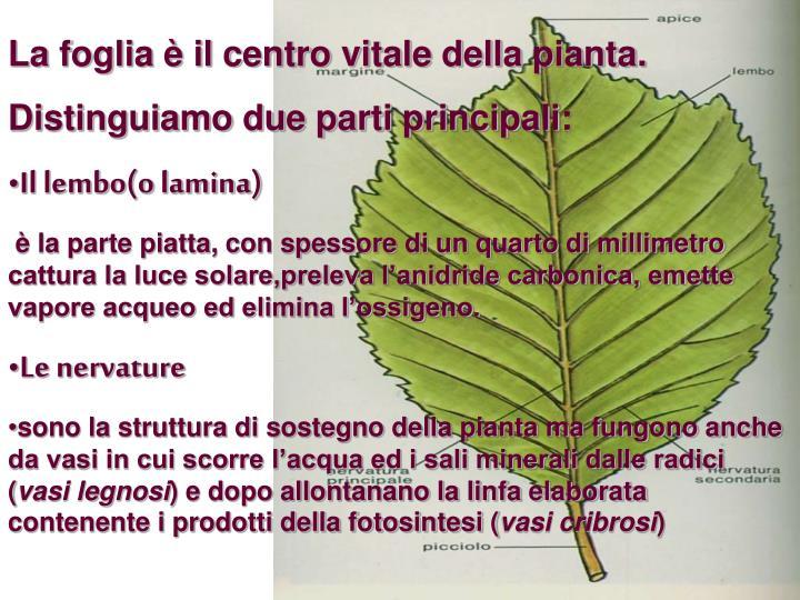 La foglia è il centro vitale della pianta.
