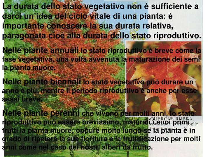 La durata dello stato vegetativo non è sufficiente a darci un'idea del ciclo vitale di una pianta: è importante conoscere la sua durata relativa, paragonata cioè alla durata dello stato riproduttivo.