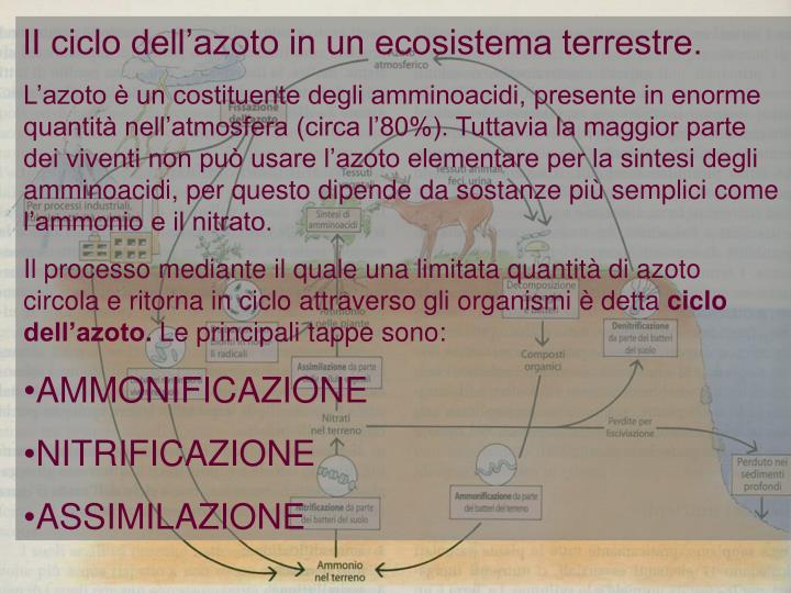 lI ciclo dell'azoto in un ecosistema terrestre.