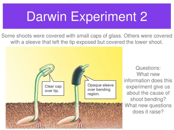 Darwin Experiment 2