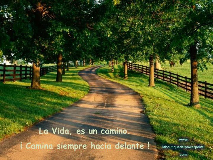 La Vida, es un camino.