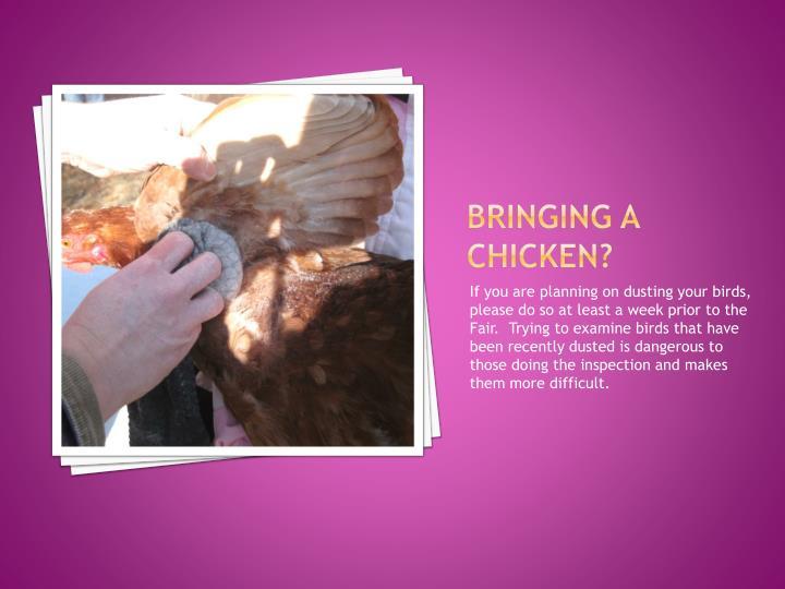 Bringing a Chicken?
