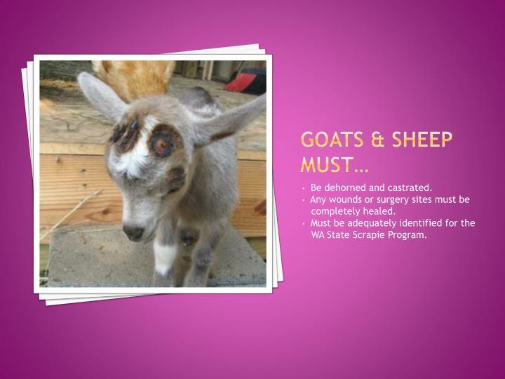 Goats & sheep must…