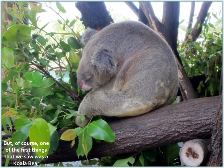 But, of course, one of the first things that we saw was a Koala Bear
