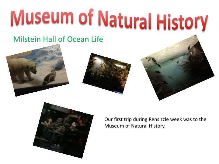 Museum of natural history1