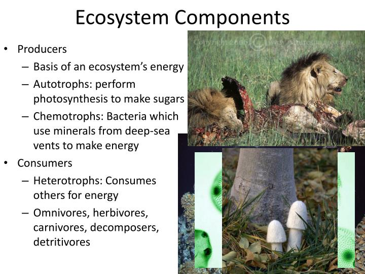 Ecosystem components