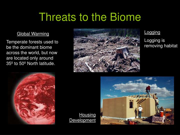ppt - temperate forest biomes powerpoint presentation