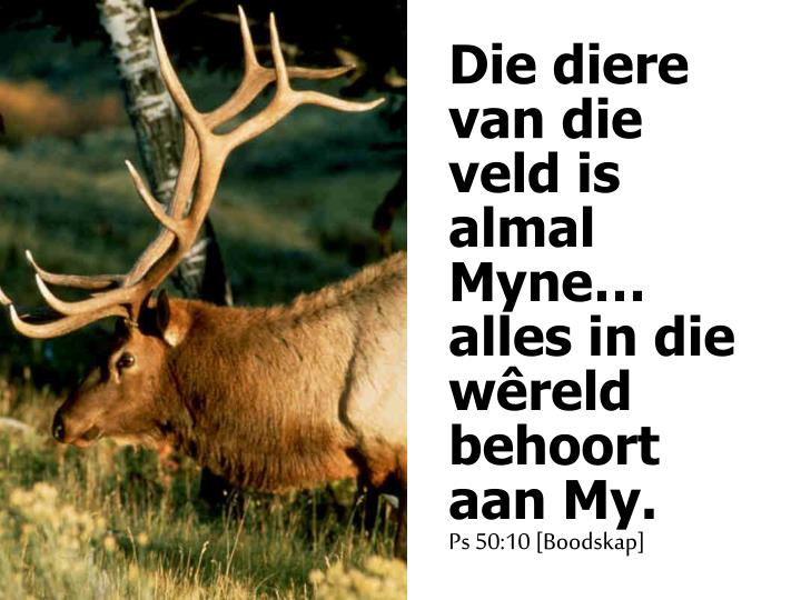 Die diere van die veld is almal Myne… alles in die wêreld behoort aan My.