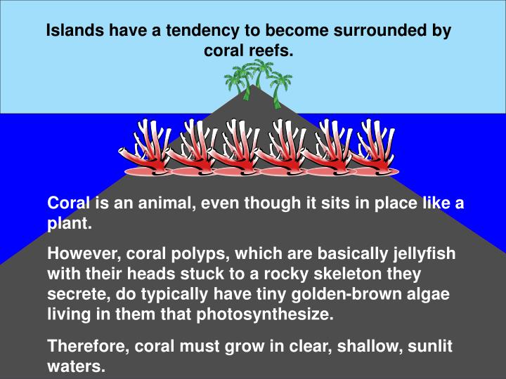 Islands have a tendency to become surrounded by coral reefs.