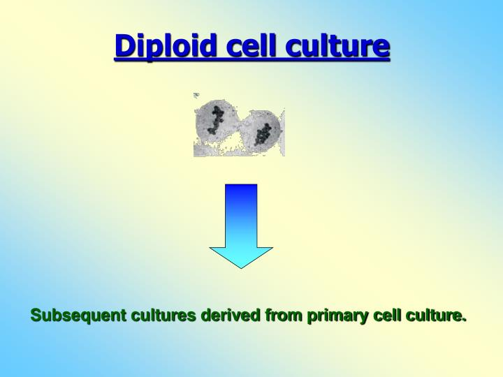 Diploid cell culture