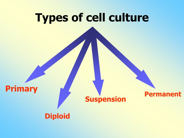 Types of cell culture