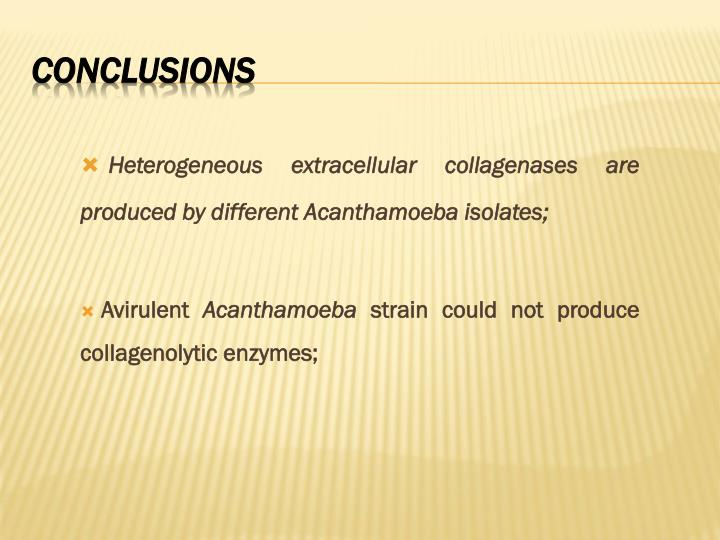 Heterogeneous extracellular collagenases are produced by different Acanthamoeba isolates;
