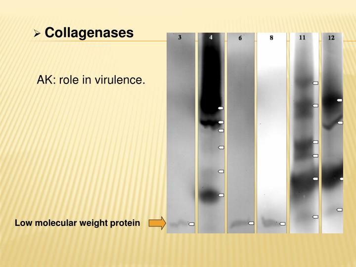 Collagenases