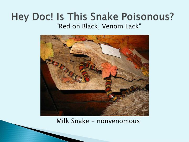 Hey Doc! Is This Snake Poisonous?