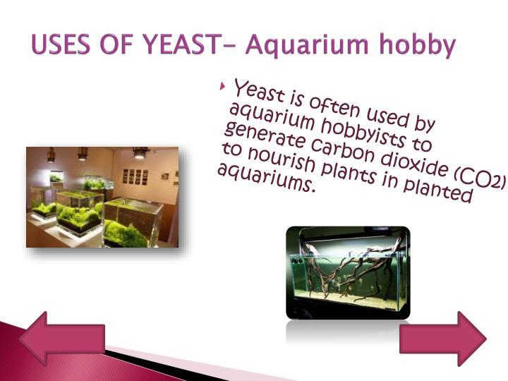 economic importance of yeast pdf