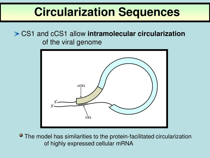 Circularization Sequences