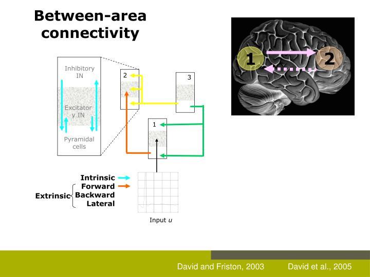 Between-area connectivity