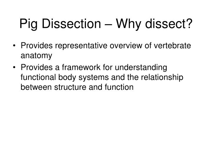 Pig dissection why dissect