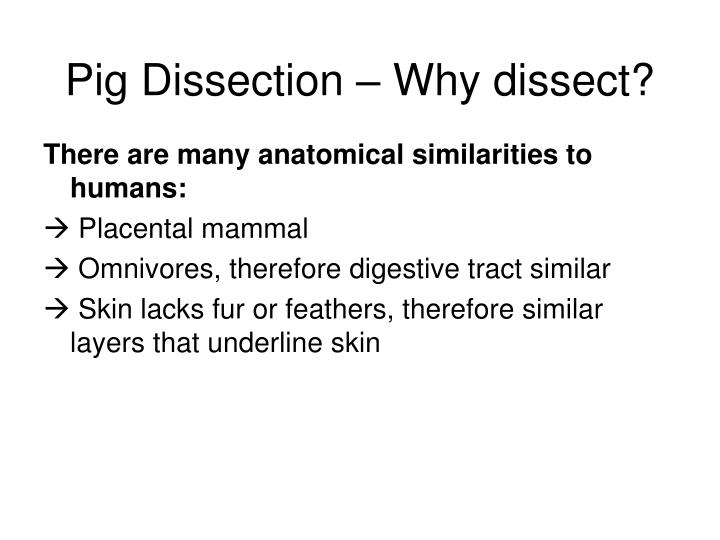 Pig dissection why dissect1