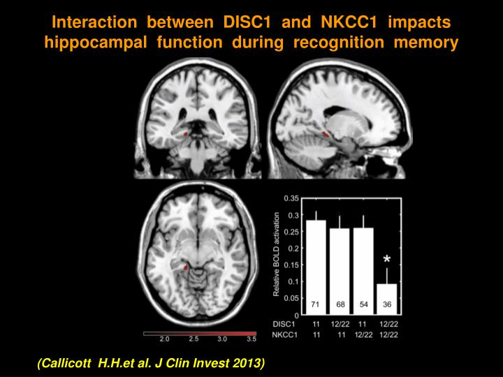 Interaction  between  DISC1  and  NKCC1  impacts hippocampal  function  during  recognition  memory