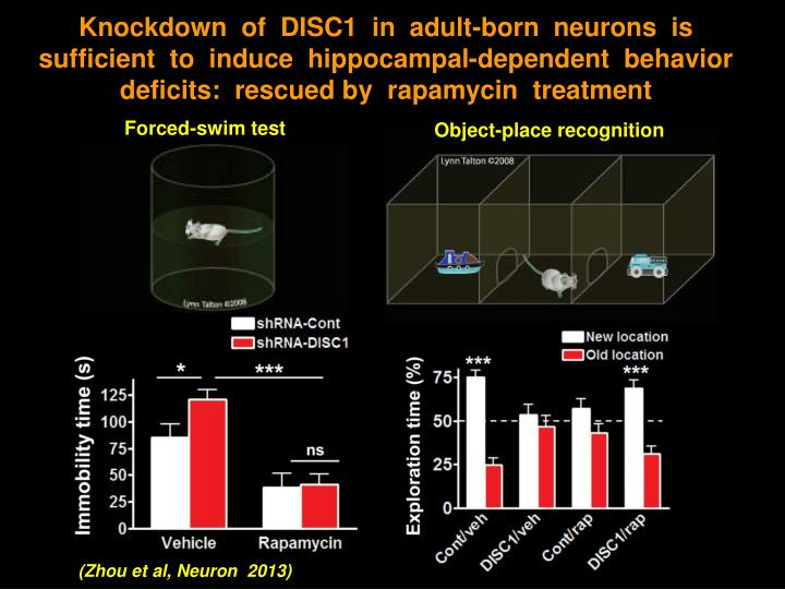 Knockdown  of  DISC1  in  adult-born  neurons  is  sufficient  to  induce  hippocampal-dependent  behavior deficits:  rescued by