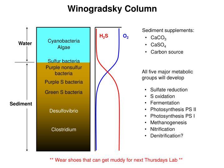 winogradsky column discription