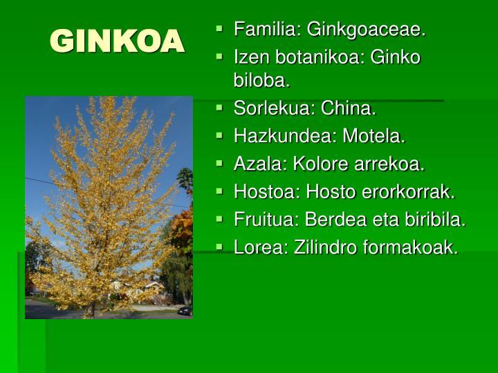GINKOA
